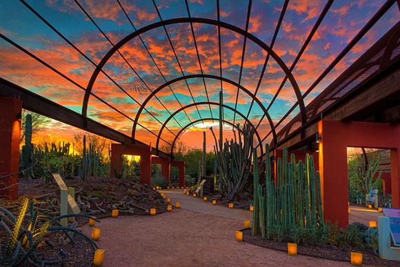 2 P.m.   Guided Tour Begins Location: Desert Botanical Gardens (map) 1201 N  Galvin Pkwy Phoenix, AZ 85008